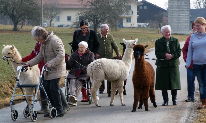 NONNA ANNA® Seniorinnen und Senioren zu Besuch bei Weber Fuenf – Alpakawanderung im Rottal